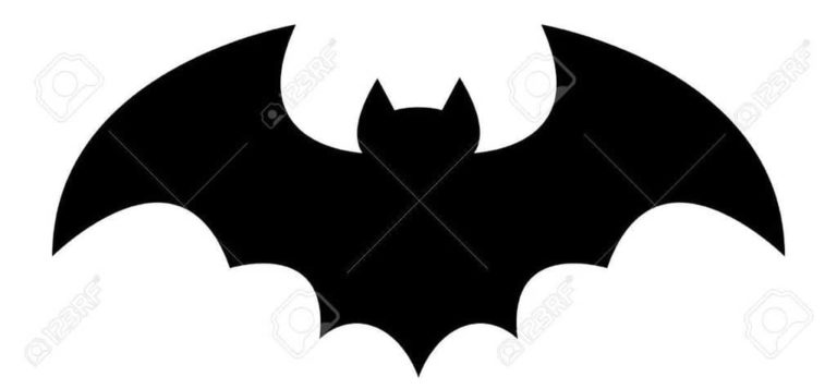 picture of a bat
